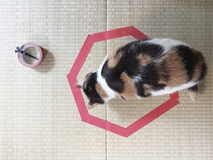 MICO Wars - How to trap your Cat in one Place as Cats love Circles - 08-12-2014 LHDEER (2)