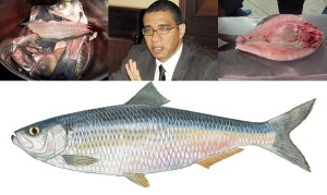 MICO Wars - How Andrew Holness made Rainforest Seafood Fish Back a Sunday Menu Staple - 26-06-2016 LHDEER